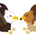 「鷹」と「鷲」と「鳶」と「隼」の違い